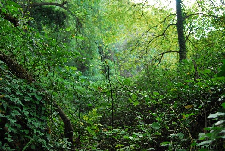 bosque ne menorca